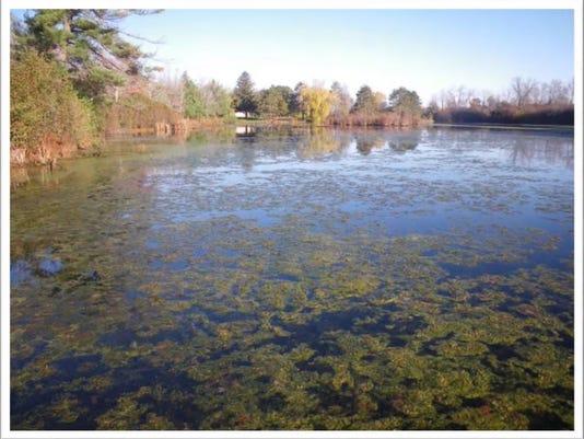 Bluegill Bay pond.jpg