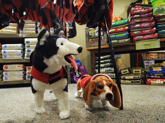 Stuffed puppies decorate the City Dog Grocery on Mass Ave. Friday night. Masschusetts Avenue Midnight Shopper was Friday November 22, 2013 with stores staying open until mid-night to acomodate holiday shoppers.