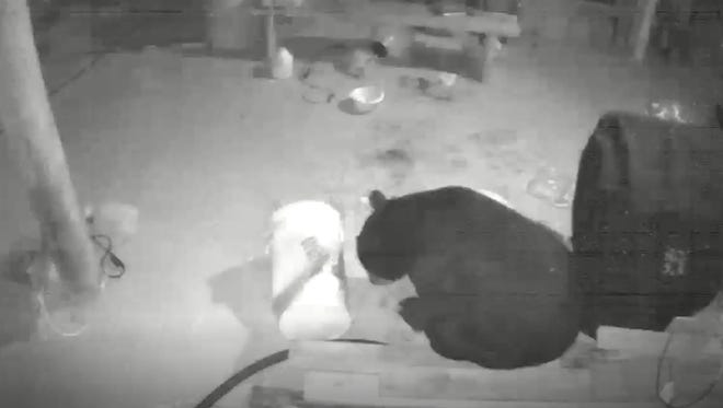 An East Milton, Fla., resident captured surveillance footage last month of a bear eating dog food and drinking peanut oil underneath his home.