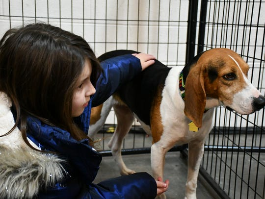 Laela Bellew, 8, with Anna, a treeing walker coonhound,