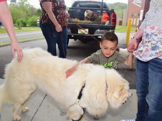 Cameron Bush, 4, shows no fear as he stops to pet a