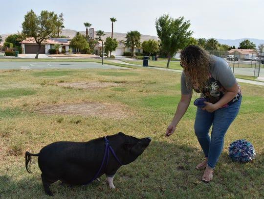 Samantha Arruda gives her pig, Pyper, a treat.