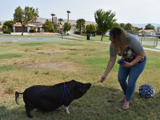 Samantha Arruda gives her pig, Pyper, a treat.
