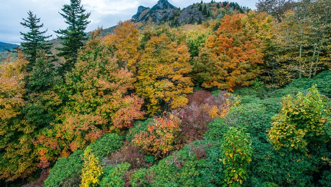 Autumn is bursting with color at Grandfather Mountain's Half Moon Overlook. Most of the foliage on Grandfather is near or at peak, with foliage in the surrounding valleys beginning to follow suit. As such, visitors to the High Country can likely expect a vibrant display this coming weekend.