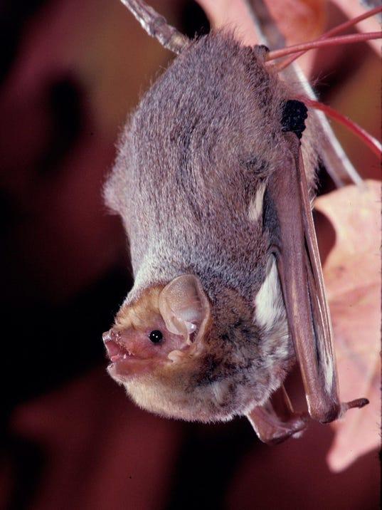 bat_pic.jpg