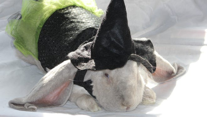 Visit with Luna, the lop-eared rabbit, and other costumed critters at Marsh Haven Nature Center.