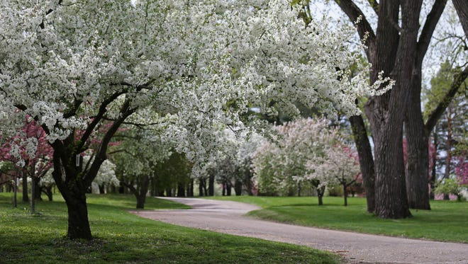 Crabapple trees bloom in white and pink on Wednesday afternoon, April 19, 2017, at Water Works Park in Des Moines. The Arie Den Boer Arboretum is one of the largest collections of crabapple trees in the world and draws 1,000s of visitors to Water Works Park in the Spring.