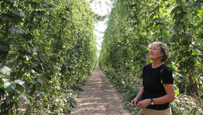 Gayle Goschie, a third-generation hop grower, admires the ripening hops on her farm in Silverton.