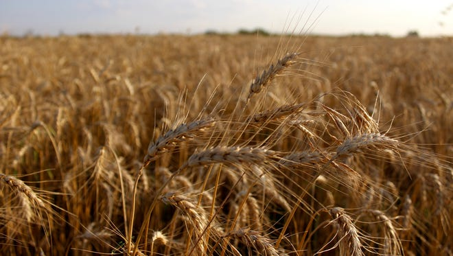 Wellington, Kansas is called the Wheat Capital of the World, and the Wellington Area Chamber of Commerce and Convention and Visitors Bureau organized a Sumner County Wheat Capital of the World Tour with 10 stops in 2012. Today, visitors can catch the Kansas Wheat Festival in July.