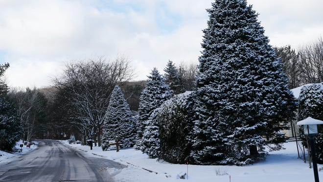 Snow covered trees on Moore Avenue on the south side of Binghamton on Thursday, December 14, 2017.