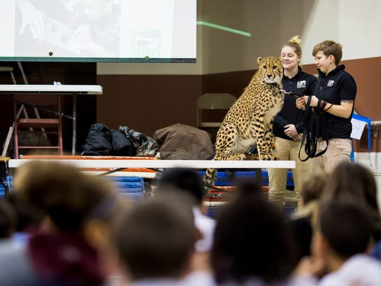 Alicia Sampson, senior Cat Ambassador trainer, holds