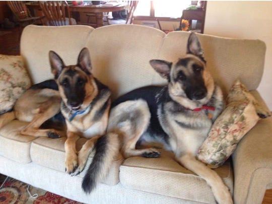 Bear (left) and Hershey (right) were Pam Felix's  'fur children.'