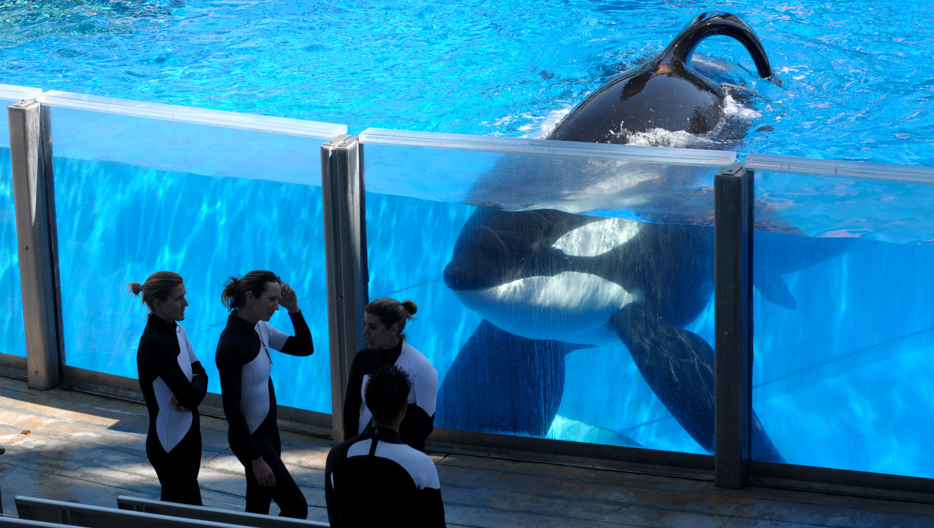 the health effects of the confinement of orcas and its deadly consequences National institutes of health  the subsequent involvement of these orcas and  their offspring in  the apparent adverse effects on orcas of such confinement  and use  animal intelligence impact animal conservation and welfare [3,4]   over aggressive and sometimes deadly human-orca incidents have.
