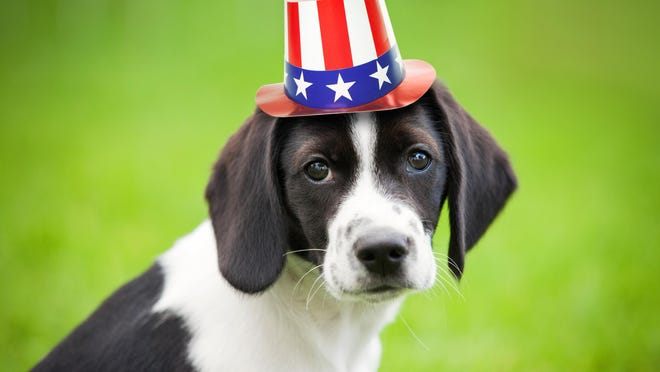 The Fourth of July can mean fun, food, friends and fireworks for people, but for pets, it can feel more like a scary alien invasion.