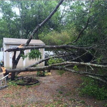 The storm took a toll on trees and power lines across