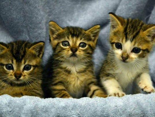 TDABrd_06-07-2014_Advertiser_1_A005~~2014~06~06~IMG_Kittens.jpg_1_1_CK7J936G_L430308292~IMG_Kittens.jpg_1_1_CK7J936G
