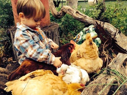 Kids can learn all about chickens at Chrisholm Historic Farmstead in Trenton on Sunday afternoon.