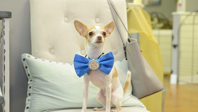If your fur baby is the light of your life, celebrate, pamper, board and groom your pet to your heart's content.