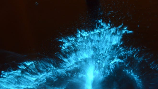 Bioluminescence is caused by microorganisms that light up when threatened.