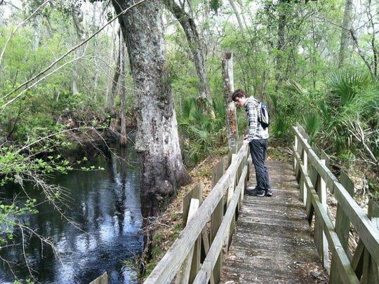 Hiker on Aucilla Sinks trail.