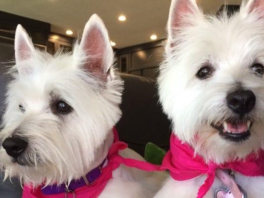 Pet Portraits: Mia and Tula