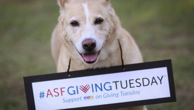 Help homeless animals on Giving Tuesday