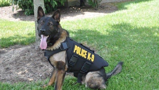 Pako, the police dog.