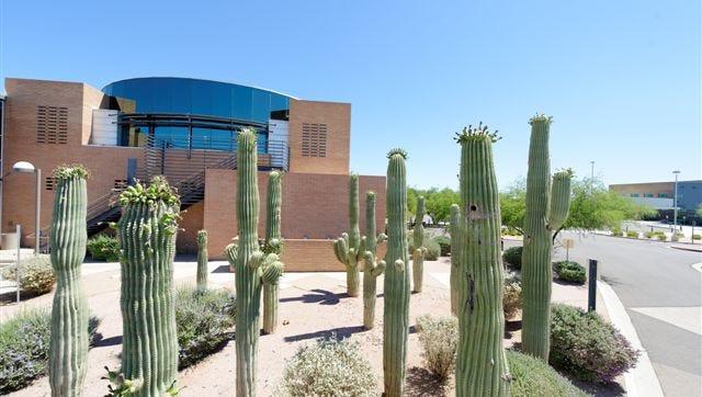 Saguaros mark the entrance to Gilbert's municipal campus.