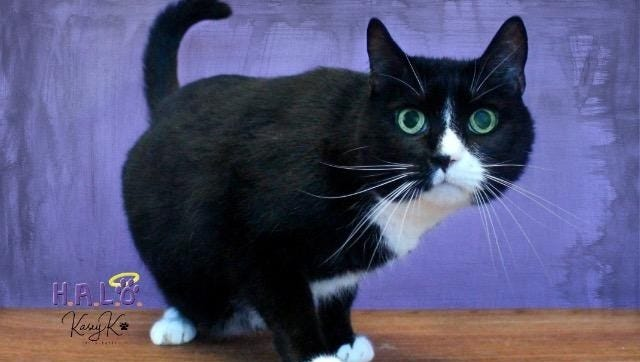 I am a big, handsome boy looking to for a family that will show me lots of love!