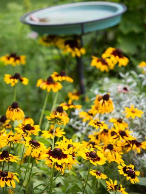 Landscape designers are continuing to use native plants