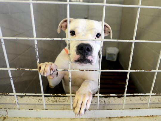 The Jackson-Madison County Humane Society is facing overcrowding and is in need of adopters.
