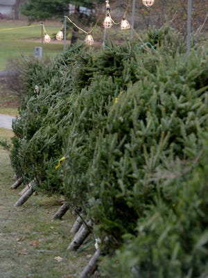 Both Hayes Arboretum and Cope Environmental Center are collecting Christmas trees to recycle.
