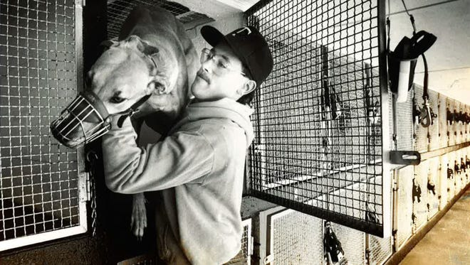 Mike Felton, a kennel helper at the Cloverleaf Dog Track in Loveland, takes a greyhound out of its cage to prepare for a schooling race in 1988.