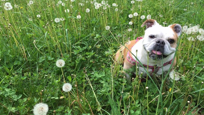 Millie passed away at the age of 12 on July 21.