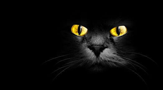 Some believe that seeing a black cat is bad luck.