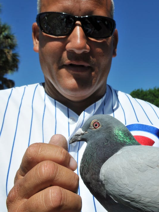 -BREBrd_04-03-2014_Daily_1_A001~~2014~04~02~IMG_-Pigeons_of_Palm_Bay_1_1_BO6.jpg