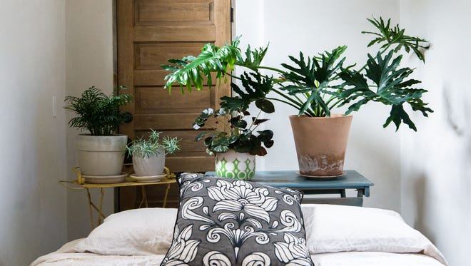 Plants in your home could help improve air quality inside your home.