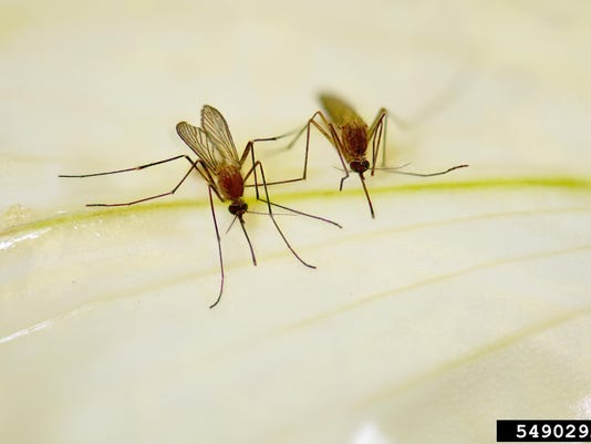culex mosquito Ary Farajollahi, Bugwood.org 5490292-LGPT