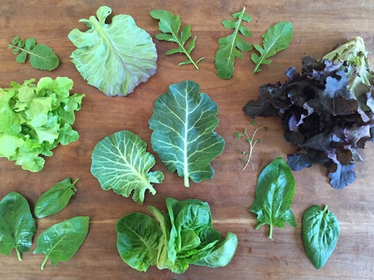 Greens from, from top clockwise:  1. Arugula.  2. Red head lettuce from Jake's Farm. 3. Verdil spinach from Betsy's Farm. 4. Buttercrunch from Jake's Farm. 5. Spinach. 6. Head lettuce, Jake's Farm. 7. Collards from Wildwood Herbal (center). 8. Broccoli sprouts (center).