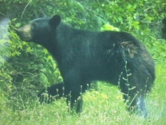 1403633227000-bear