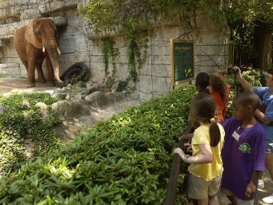 Joy the elephant at Greenville Zoo