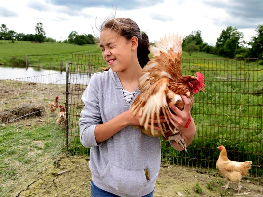Peyton White holds a chicken on her family's farm in Trumansburg. Peyton, age 11, was afraid of the chickens when she first went to live with her grandparents but now cares for the chickens and many other farm animals. Peyton says she wants to be a veterinarian when she grows up.