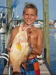 Hogfish, like this one speared several years ago  in