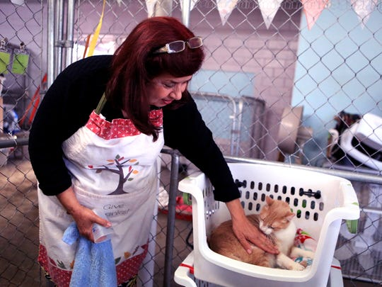 Elizabeth Cremar pets Podo while working in a cat kennel at the Animal Rescue Kleberg in Kingsville on Monday, February 13, 2016.The no-kill shelter is seeking donations for several facility needs, including upgrading cat and dog kennels.