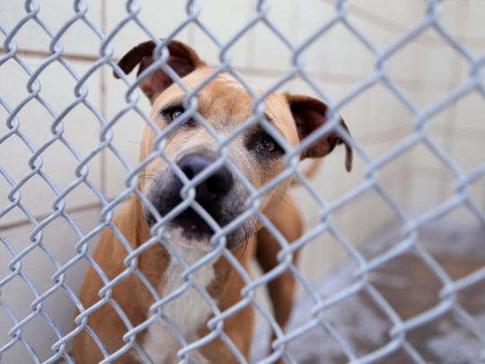 A dog peers from behind cages at Animal Control. The