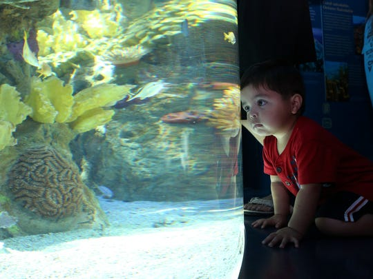 John Hinojosa, 2, checks out fish in the Mesoamerican