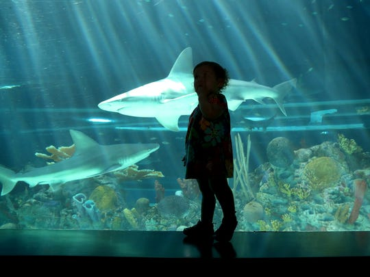 Bianca Parrish, 1 1/2, checks out the sharks in the