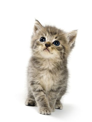 The Pensacola Humane Society welcomes kitten season with a Kitten Shower from noon to 4 p.m. today.