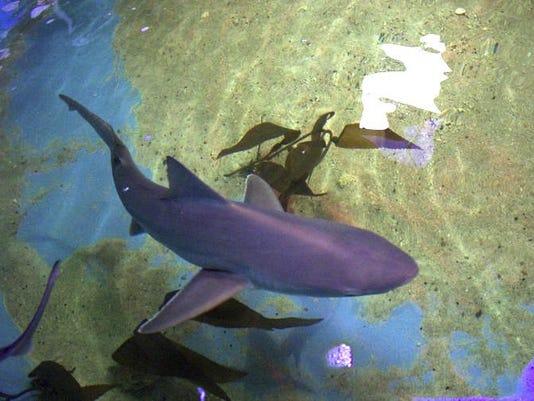 Sharks In Basement Pool