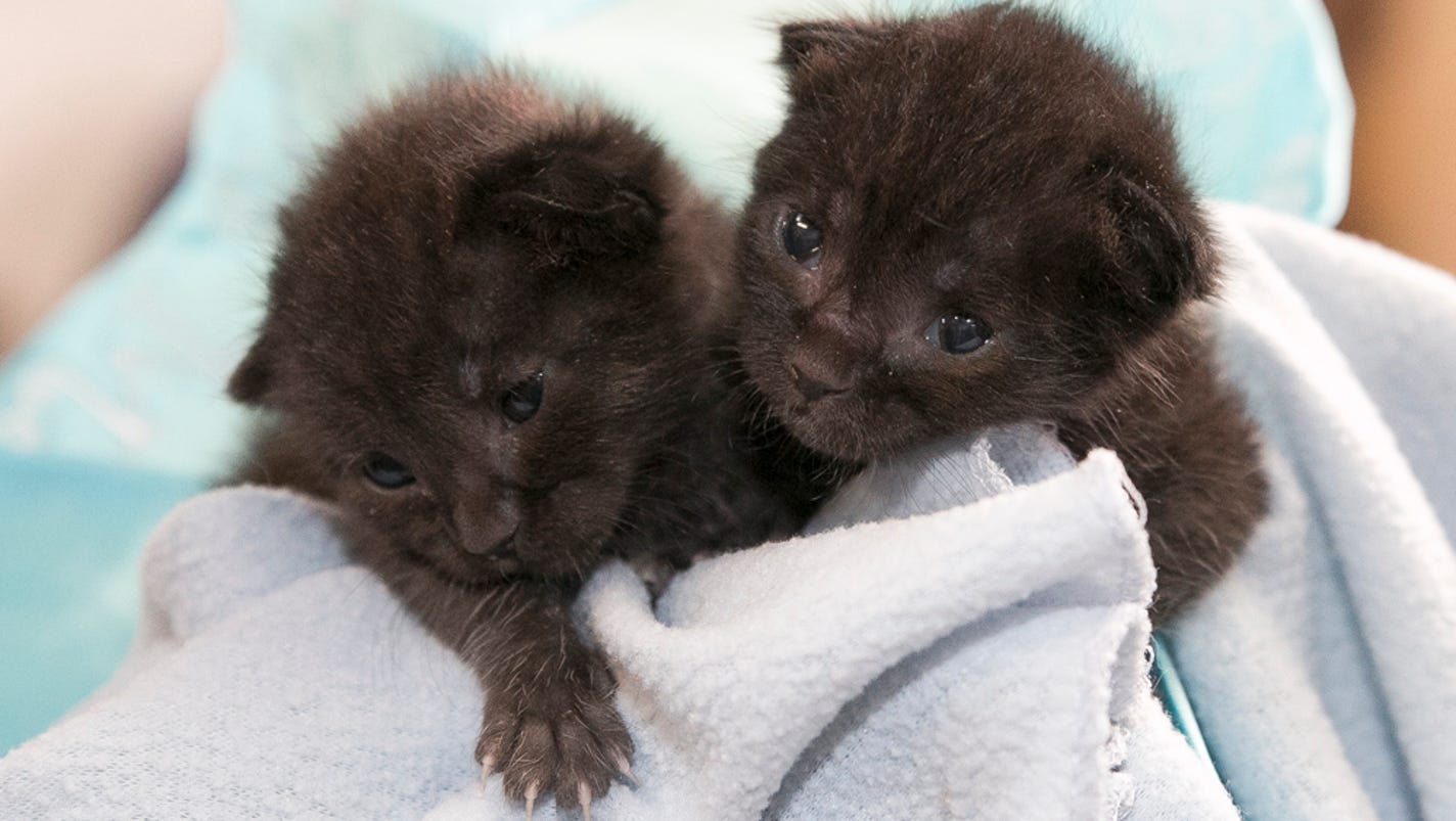 Newborn Kittens Survive Accidental Truck Ride